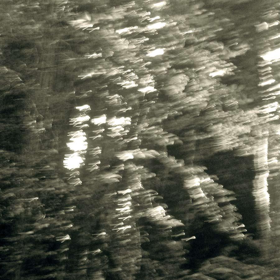 Redwood Balance
