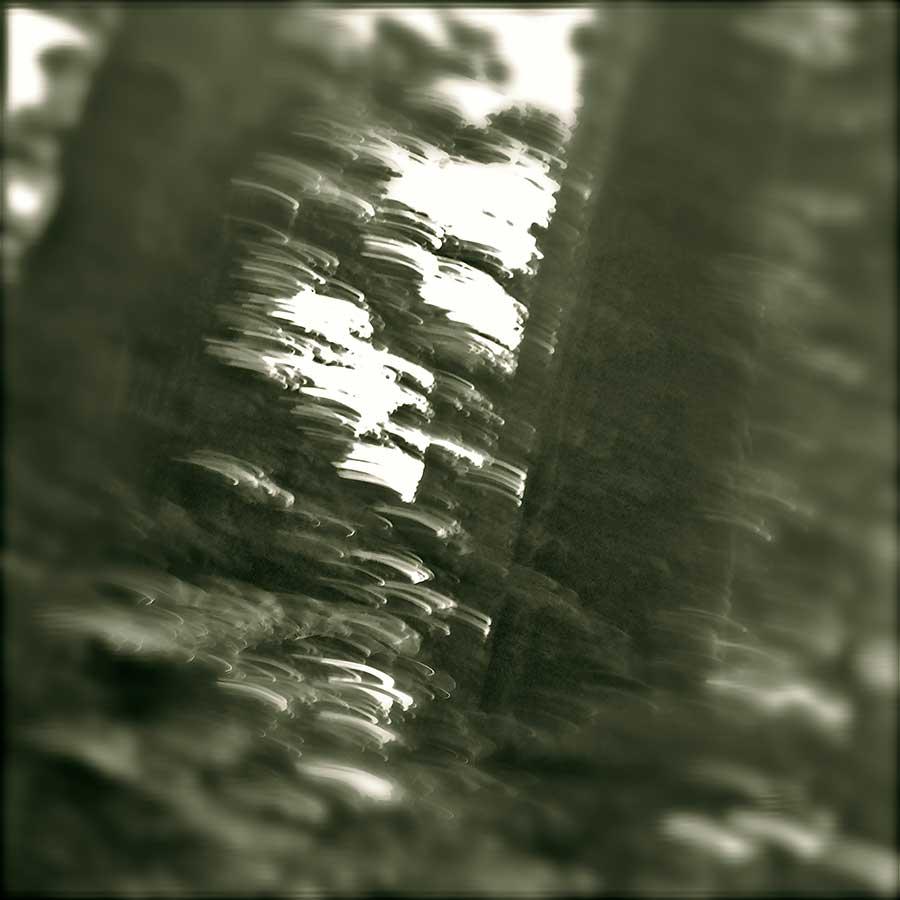 Redwood Rings